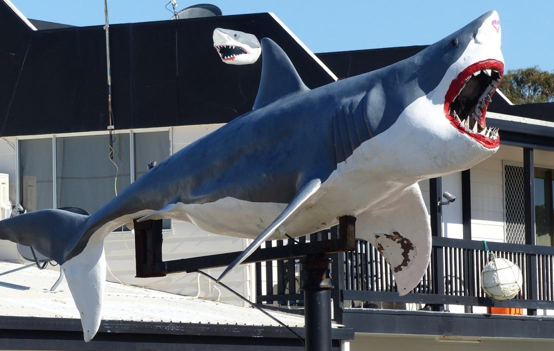 051016-shark